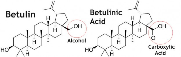 Betulin and Betulinic Acid