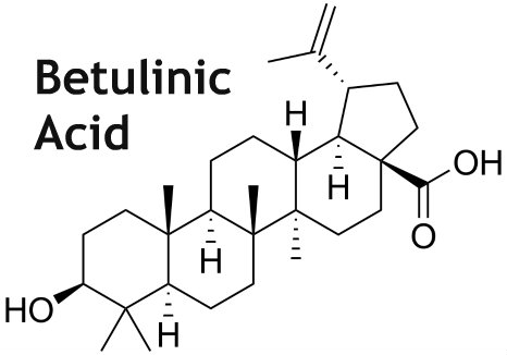 Betulinic Acid