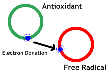 How an Antioxidant Works