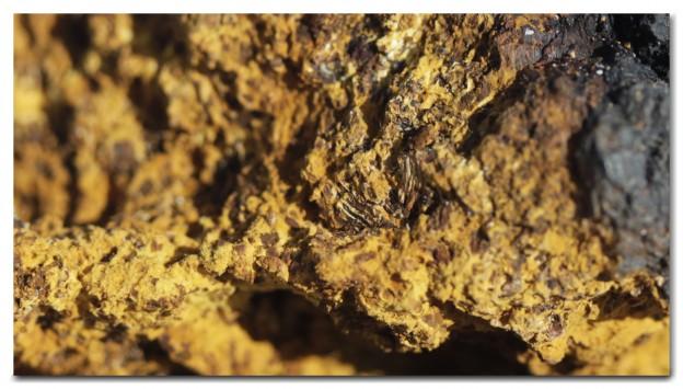 Alaska Chaga Closeup
