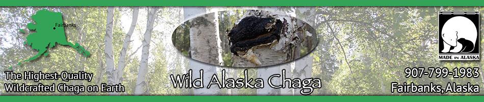 Wild Alaska Chaga Mushroom Header