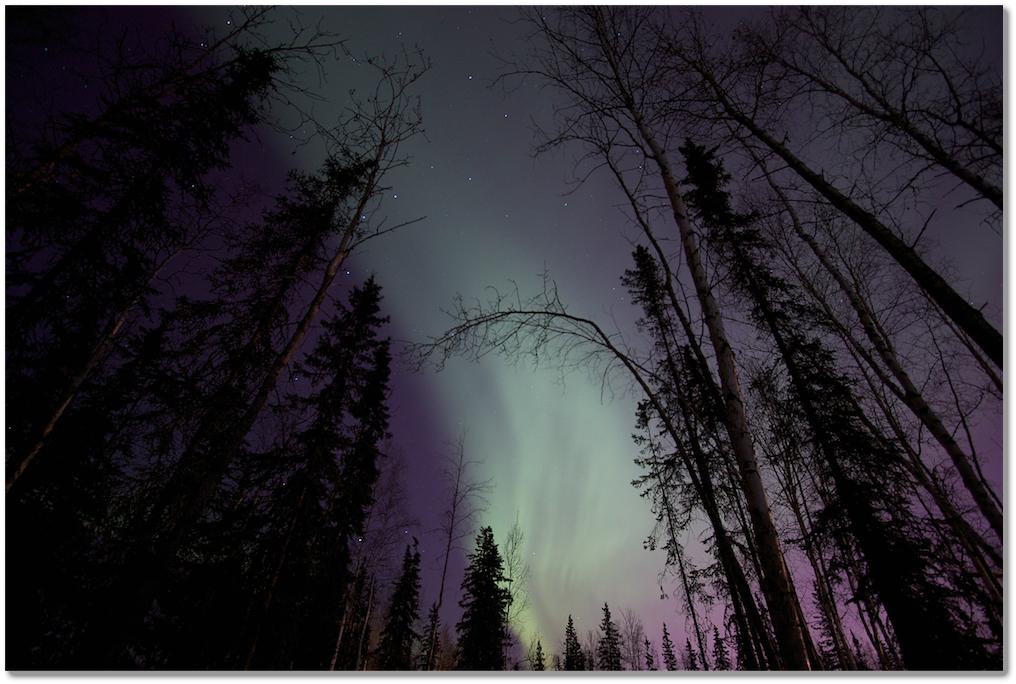 Wild Alaska Chaga Aurora